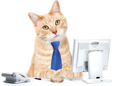 Cat with tie at computer